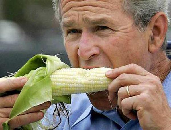 corn-bush